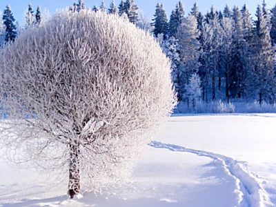 Zimniiskazka